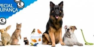 Saiba como poupar no IRS com os animais domésticos